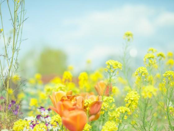青空の下に鮮やかな花が咲いている